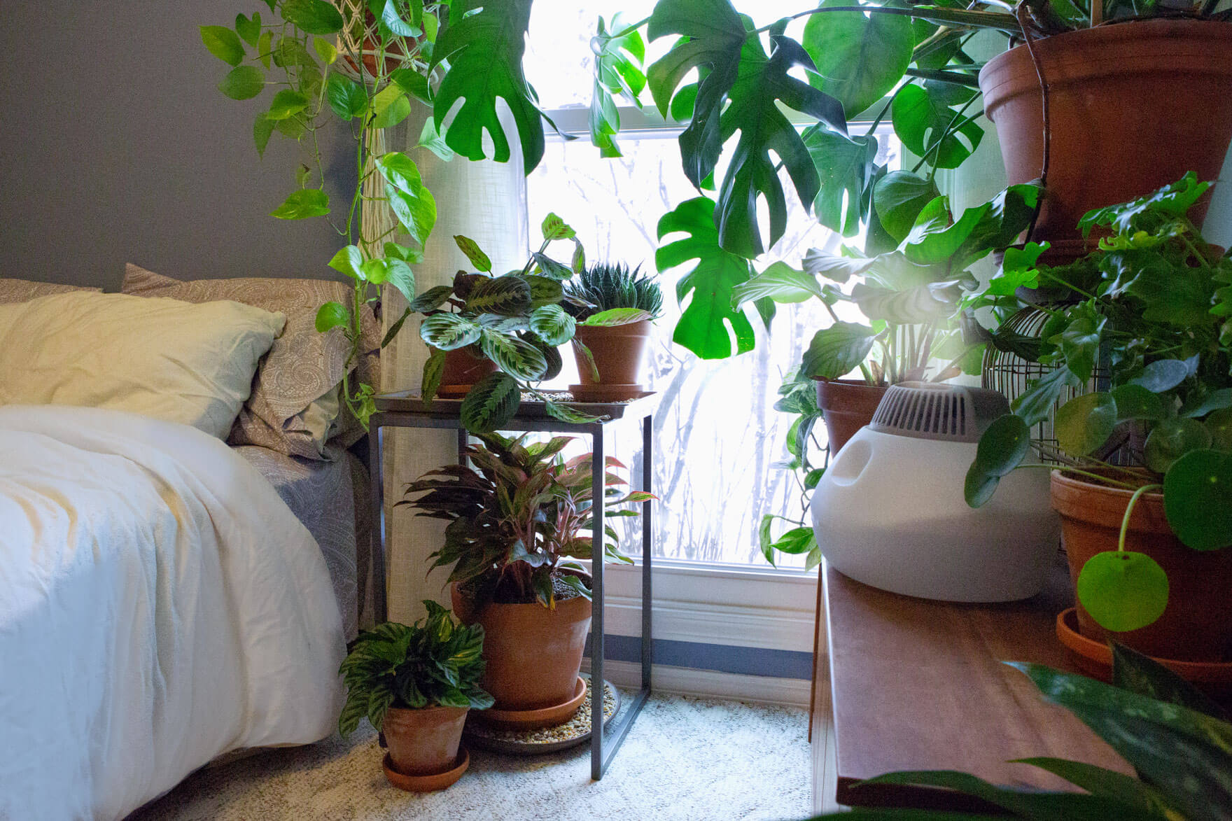 Humidity For Your Houseplants