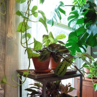 Caring for your plants while you're away