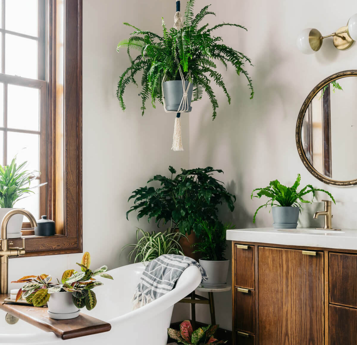 Best Plants for the Bathroom: Bloomscape Your Space