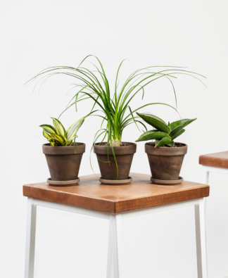 Buy Bloomscape Potted Easy Peasy Collection