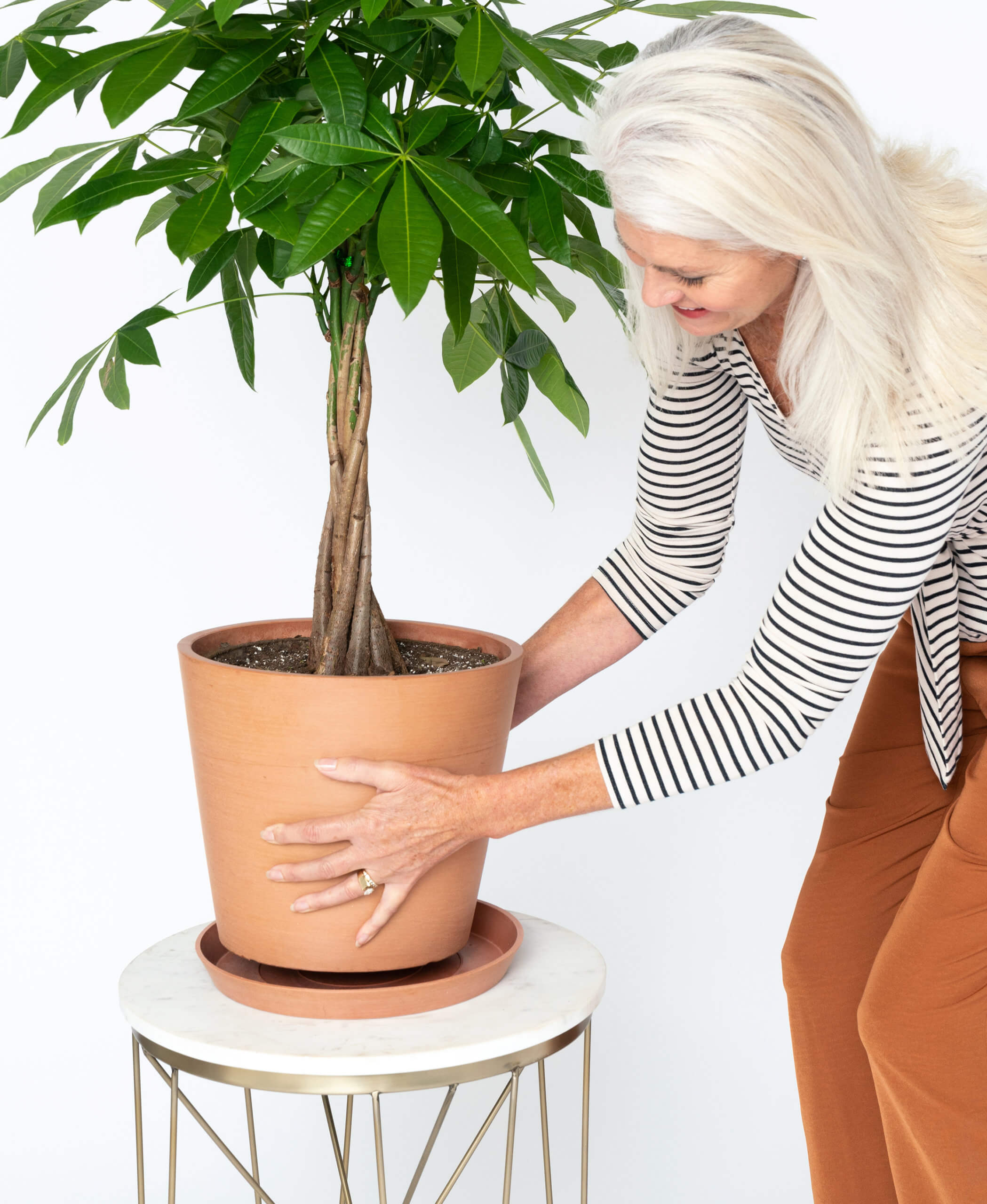 Buy Large Potted Money Tree Indoor Plant Bloomscape