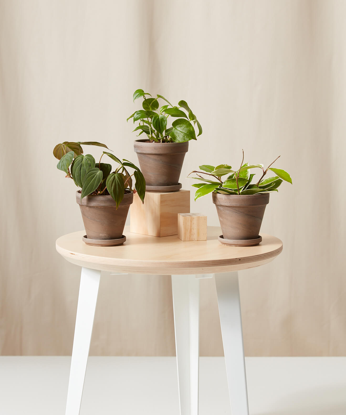 Buy Bloomscape Potted Happier Trails Collection