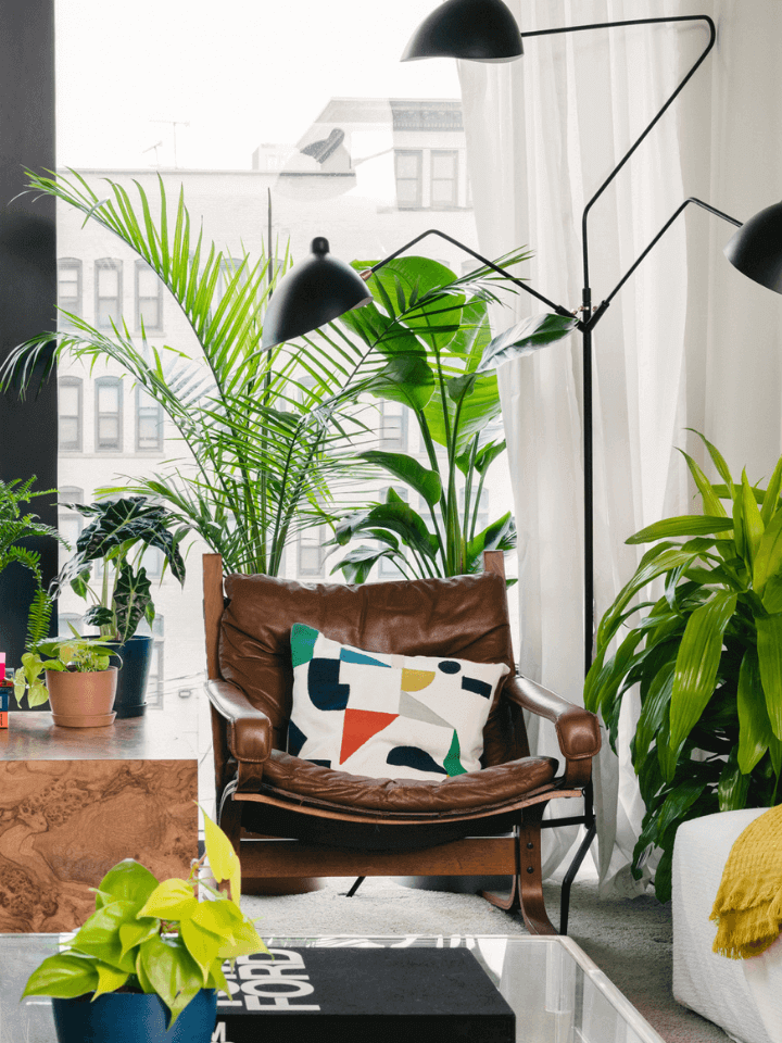 Living room with Bloomscape potted plants, chair, lamp, and window.